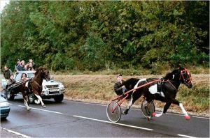 Une scène  de La  course   illégale de  chevaux