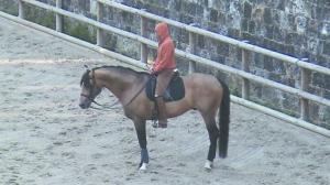 le cheval et sa monture . séance d'entraînement...