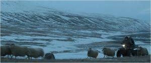 Le troupeau non ateint par la maladie pourra-t-il être sauvé ...