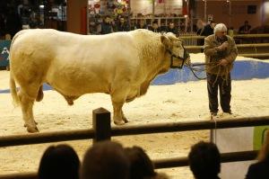 Jean ( Gérard Depardieu) expose son Taureau au salon de l'Agriculture...