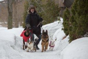 la nouvelle vie de Paul Sneijder : Promeneur de chiens
