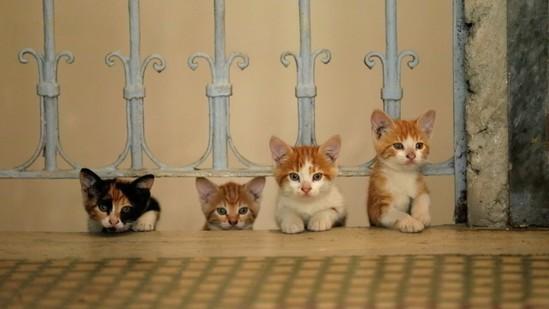 ARTE MARE - Kedi